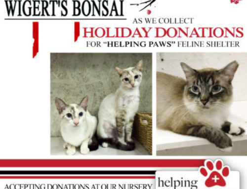 "Collecting Holiday Donations at Wigert's Bonsai Nursery for ""Helping Paws"""